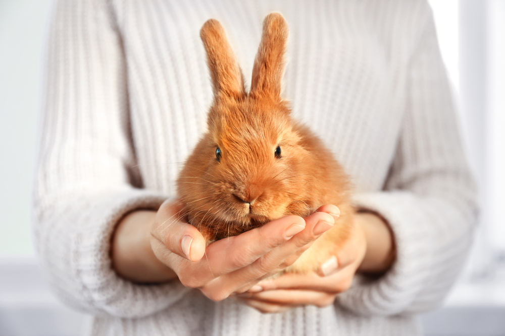 Why aren't all cosmetics brands cruelty-free?