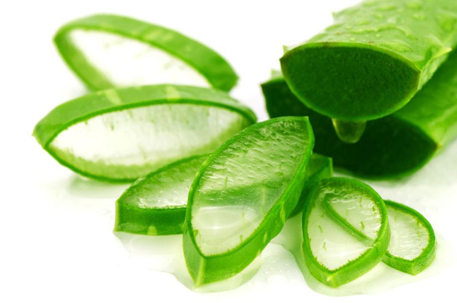 The healing aloe vera plant