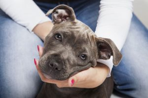Woman with Staffordshire Terrier